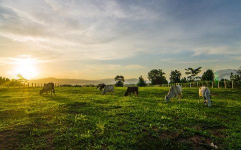 澳洲购买休闲农场贷款详解(Hobby Farm)