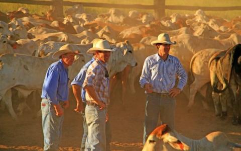 休伊特牛业公司为庞大的投资组合增加了价值2500万元的布雷瓦拉纳公司